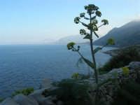 Riserva Naturale Orientata Zingaro - 24 febbraio 2008   - Riserva dello zingaro (756 clic)