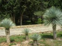 giardino del Baglio Trinità - 22 aprile 2007    - Castelvetrano (803 clic)