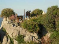 panorama e caprette - 20 maggio 2007  - San vito lo capo (730 clic)