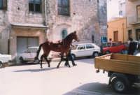 Festeggiamenti in onore di Maria Santissima dei Miracoli - Corse dei cavalli: prima della partenza, piazzetta Leopardi - giugno 1982  - Alcamo (1512 clic)