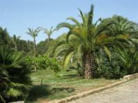 giardino del Baglio Trinità - 22 aprile 2007    - Castelvetrano (920 clic)