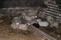 Il Presepe Vivente di Custonaci nella grotta preistorica di Scurati (grotta Mangiapane) (12) - 26 dicembre 2007  - Custonaci (1090 clic)