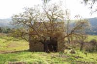 ai bordi del Bosco Scorace - 21 febbraio 2009  - Buseto palizzolo (2022 clic)