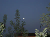 luna piena - 13 ottobre 2008   - Alcamo (648 clic)