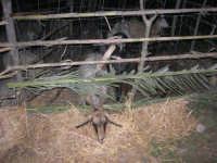 Presepe Vivente - 26 dicembre 2008  - Balata di baida (2172 clic)