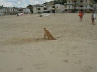 Laki in cerca di un poco di frescura - 28 agosto 2005  - Alcamo marina (1441 clic)