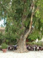 L'albero nel Baglio - 23 agosto 2005  - Scopello (2173 clic)