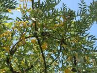 un nido tra i rami - 21 ottobre 2008   - Alcamo (1066 clic)