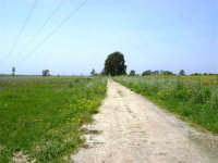 Parco Faunistico - Venatorio di Baglio Trinità - 22 aprile 2007    - Castelvetrano (1077 clic)