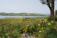 Lago Rubino - 17 maggio 2009  - Fulgatore (1478 clic)