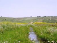Parco Faunistico - Venatorio di Baglio Trinità: un puntino scuro in mezzo all'erba, vicino l'acqua: c'è un grosso cinghiale che ci osserva - 22 aprile 2007    - Castelvetrano (1534 clic)