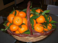 un paniere di mandarini - 18 febbraio 2007  - Bagheria (3315 clic)