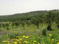 Parco Faunistico - Venatorio di Baglio Trinità - 22 aprile 2007    - Castelvetrano (1204 clic)