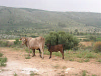 C/da Cucca (sulla strada per San Vito Lo Capo, un paio di chilometri dopo Purgatorio)- Agriturismo La Valle dei Tramonti - 27 maggio 2007   - Custonaci (978 clic)