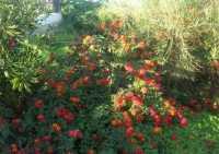 flora - 17 novembre 2009  - Castellammare del golfo (2174 clic)