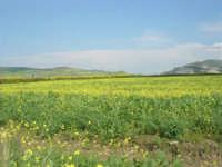 la campagna a primavera - 3 maggio 2009  - Fulgatore (1945 clic)