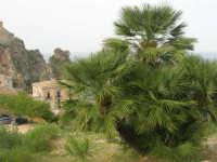 palma nana, faraglioni e sentiero che porta alla tonnara - 19 aprile 2008   - Scopello (777 clic)