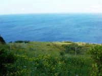 verde ed azzurro - 1 maggio 2007  - Riserva dello zingaro (1173 clic)