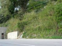 lungo la strada da Palazzo Adriano a Chiusa Sclafani: si perde l'acqua! - 23 aprile 2006   - Chiusa sclafani (1772 clic)