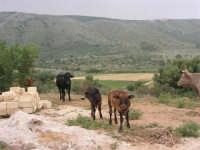 C/da Cucca (sulla strada per San Vito Lo Capo, un paio di chilometri dopo Purgatorio)- Agriturismo La Valle dei Tramonti - 27 maggio 2007   - Custonaci (836 clic)