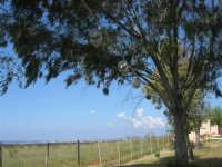 C/da Digerbato - Tenuta Volpara - Antichi giochi popolari: le pentolacce di coccio da rompere, appese ad una corda, tra due alberi - 27 aprile 2008   - Marsala (1310 clic)