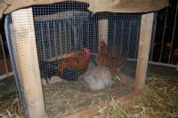 Presepe Vivente curato dall'Istituto Comprensivo G. Pascoli (38) - 22 dicembre 2007  - Castellammare del golfo (576 clic)