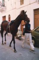 Festeggiamenti in onore di Maria Santissima dei Miracoli - Corse dei cavalli: prima della partenza, via Girolamo Caruso - giugno 1982  - Alcamo (2119 clic)
