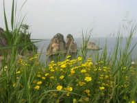 margherite e faraglioni - 19 aprile 2008   - Scopello (790 clic)