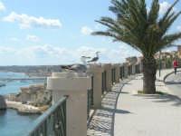 dal belvedere, vista sul porto con gabbiani - 25 aprile 2008   - Sciacca (1737 clic)