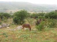 C/da Cucca (sulla strada per San Vito Lo Capo, un paio di chilometri dopo Purgatorio)- Agriturismo La Valle dei Tramonti - 27 maggio 2007   - Custonaci (867 clic)