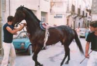Festeggiamenti in onore di Maria Santissima dei Miracoli - Corse dei cavalli: prima della partenza, via Girolamo Caruso - giugno 1982  - Alcamo (2224 clic)