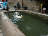 La paperella nella fontana della piazzetta - 23 agosto 2005  - Scopello (1243 clic)