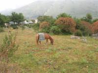 C/da Cucca (sulla strada per San Vito Lo Capo, un paio di chilometri dopo Purgatorio)- Agriturismo La Valle dei Tramonti - 27 maggio 2007   - Custonaci (847 clic)