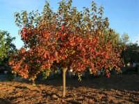 I colori dell'autunno - 21 novembre 2005   - Alcamo (1845 clic)
