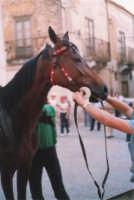 Festeggiamenti in onore di Maria Santissima dei Miracoli - Corse dei cavalli: prima della partenza, via Girolamo Caruso - giugno 1982  - Alcamo (2210 clic)