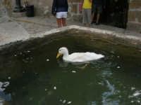 La paperella nella fontana della piazzetta - 23 agosto 2005  - Scopello (1095 clic)