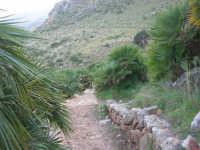 Riserva Naturale Orientata Zingaro - sentiero tra le palme nane - 24 febbraio 2008   - Riserva dello zingaro (848 clic)
