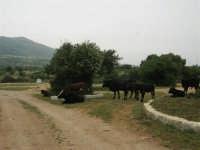 C/da Cucca (sulla strada per San Vito Lo Capo, un paio di chilometri dopo Purgatorio)- Agriturismo La Valle dei Tramonti - 27 maggio 2007   - Custonaci (811 clic)