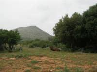 C/da Cucca (sulla strada per San Vito Lo Capo, un paio di chilometri dopo Purgatorio)- Agriturismo La Valle dei Tramonti - 27 maggio 2007   - Custonaci (860 clic)