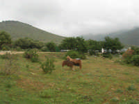 C/da Cucca (sulla strada per San Vito Lo Capo, un paio di chilometri dopo Purgatorio)- Agriturismo La Valle dei Tramonti - 27 maggio 2007   - Custonaci (825 clic)