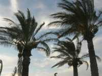 palme in spiaggia - 27 settembre 2009   - San vito lo capo (1662 clic)