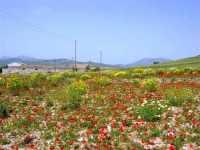 alle falde della Montagna Grande - 17 maggio 2009  - Fulgatore (2976 clic)
