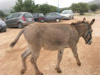 C/da Cucca (sulla strada per San Vito Lo Capo, un paio di chilometri dopo Purgatorio)- Agriturismo La Valle dei Tramonti - 27 maggio 2007   - Custonaci (1120 clic)