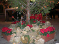 atmosfera natalizia in piazza Ciullo - 23 dicembre 2006   - Alcamo (1059 clic)