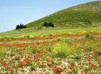 alle falde della Montagna Grande - 17 maggio 2009  - Fulgatore (3973 clic)