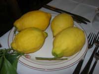 C/da Digerbato - Tenuta Volpara - limoni - 27 aprile 2008   - Marsala (2235 clic)