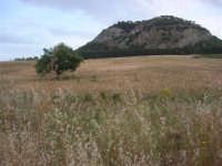 campo di grano - 1 giugno 2008    - Segesta (917 clic)