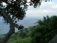 panorama - 1 maggio 2007  - Riserva dello zingaro (1846 clic)