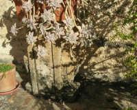 antica terrazza: particolare - 4 marzo 2007  - Bagheria (1714 clic)