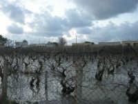 vigna allagata, dopo la pioggia della notte precedente - 1 febbraio 2009   - Marsala (5140 clic)
